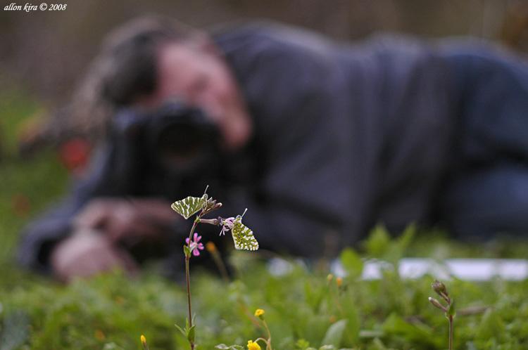מאמר צילום מאקרו, תאורה טבעית