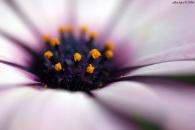 מאמר צילום – צילומי פרחים