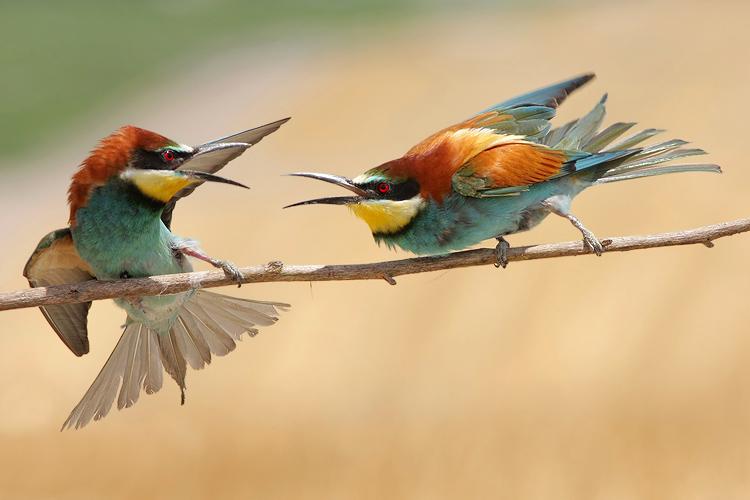 צילום ציפורים מתוך מסתור