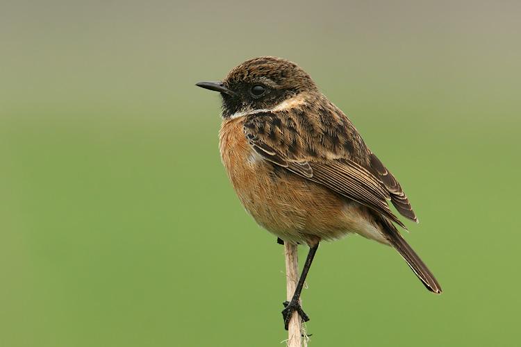 מאמר צילום ציפורים