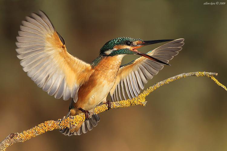 צילום ציפורים ממסתור, מאמר