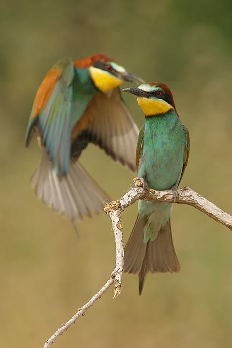 מאמר צילום ציפורים בהסוואה
