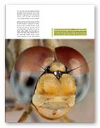 כתבה בנושא צילום שפיריות, אלון קירה טבע הדברים