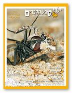 כתבה בנושא מאקרו, עכבישים, אלון קירה, טבע הדברים