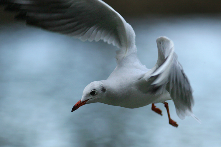 מאמר צילום ציפורים במעוף