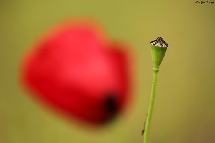 טכניקת צילום פרחים