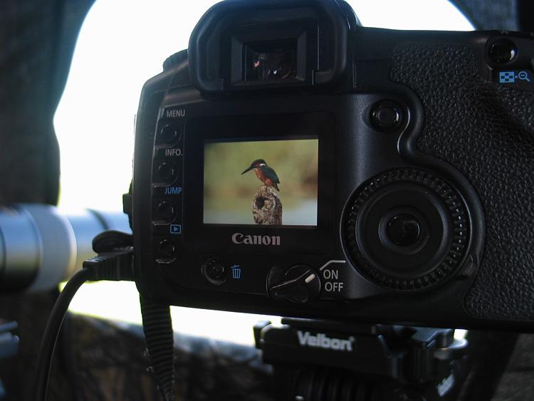 מאמר צילום ציפורים מתוך מסתור