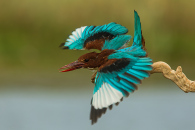 מאמר צילום ציפורים – הקדמה