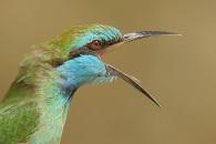 מאמר צילום ציפורים, עדשות ומרחקי עבודה