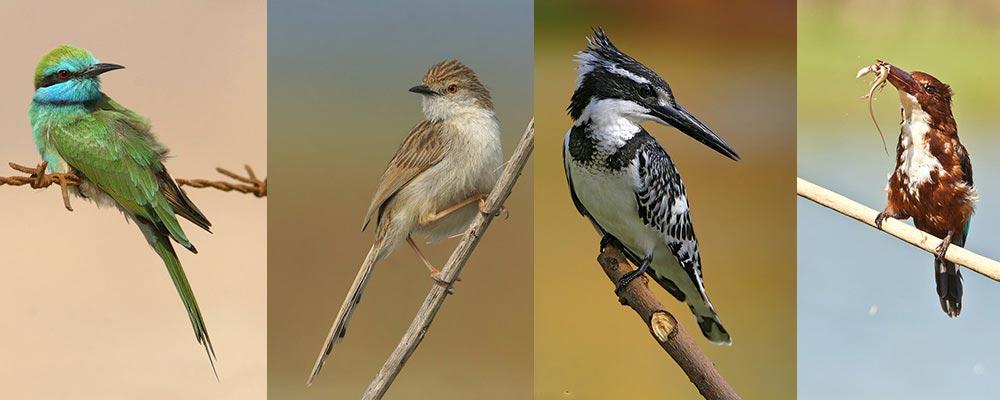 צילום ציפורים