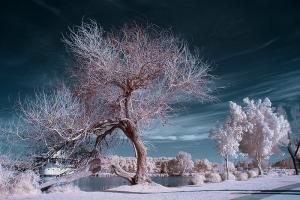 צילומי אינפרא אדום,  INFRARED PHOTOGRAPHY